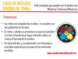 Mollera3_MedicinaTradicional